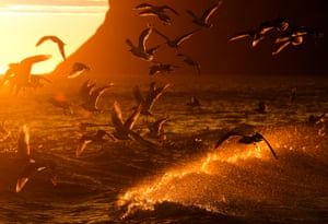 Feeding birds in Saltburn-by-the-sea at sunrise are disturbed by waves breaking against the shore, in North Yorkshire, England