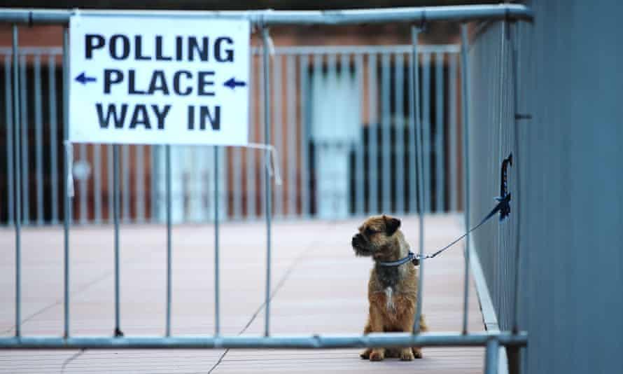 Voting dog
