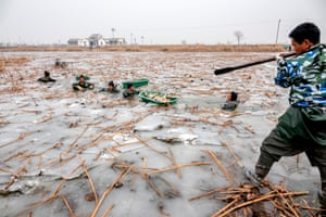 Handan, China. Farmers wade through the icy water to harvest lotus roots in a lake