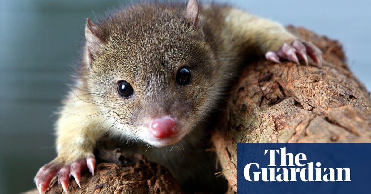 Australia's native species' future remains vulnerable, law council says | Environment | The Guardian