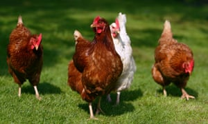 It is legal in the US to wash chicken carcasses with chlorinated water.