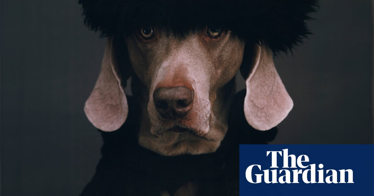 Costumed canines by William Wegman – in pictures