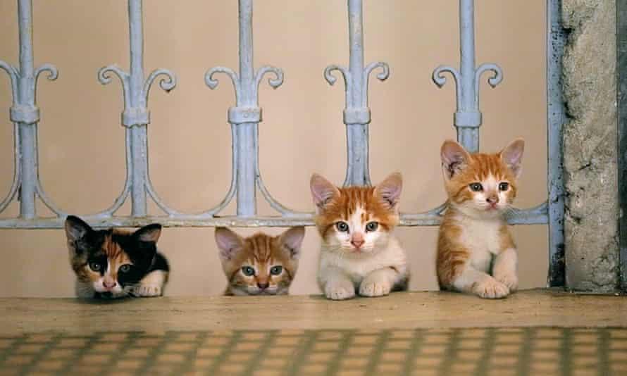 Kedi kittens
