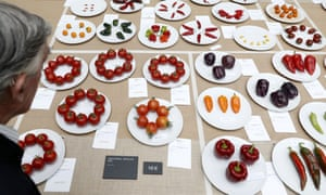 Vegetables on display at a horticultural show.