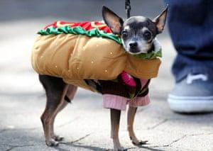 Tompkins Square Halloween Dog Parade, New York, America, 2012