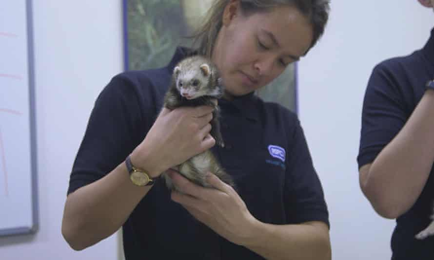 Furry friend ... Animal Rescue School.