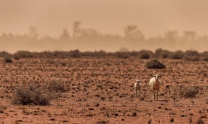 A lamb and its mother in a dry paddock in NSW