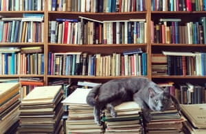 A cat resting on books in a library