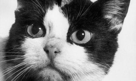 Félicette the astrocat.