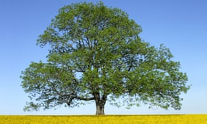 The ash tree: facing more serious problems than obsolescence.