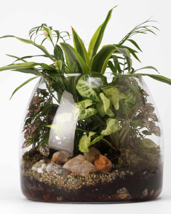 Small but perfectly formed: a terrarium.