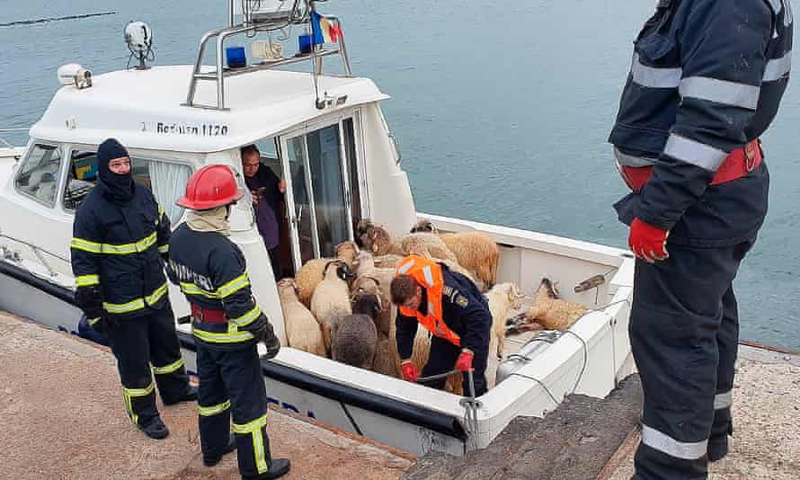 Only 33 sheep of a cargo of 14,600 were rescued when the Queen Hind ship overturned in the port of Midia in November 2019.