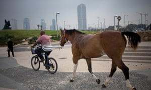 Around 15% of the inhabitants of central Tel Aviv (plus the odd horse) cycle to work or school.