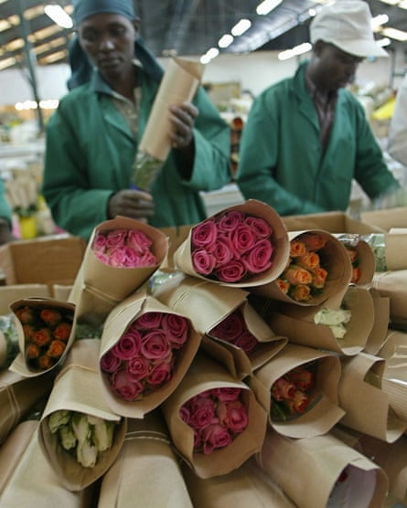 Kenya's rose trade is booming and some farms have recently acquired Fairtrade certification.