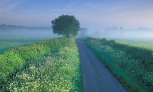 'We need to try to encourage people to think about verges as a network of nature reserves,' says Dr Trevor Dines.