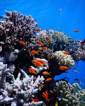 To protect the Red Sea reefs, countries including Jordan, Israel, Saudi Arabia and Egypt will have to coordinate efforts.