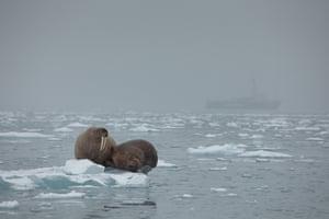 Arctic wildlife.