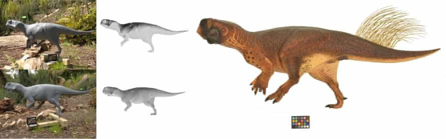 Countershading matches diffuse light in Psittacosaurus.