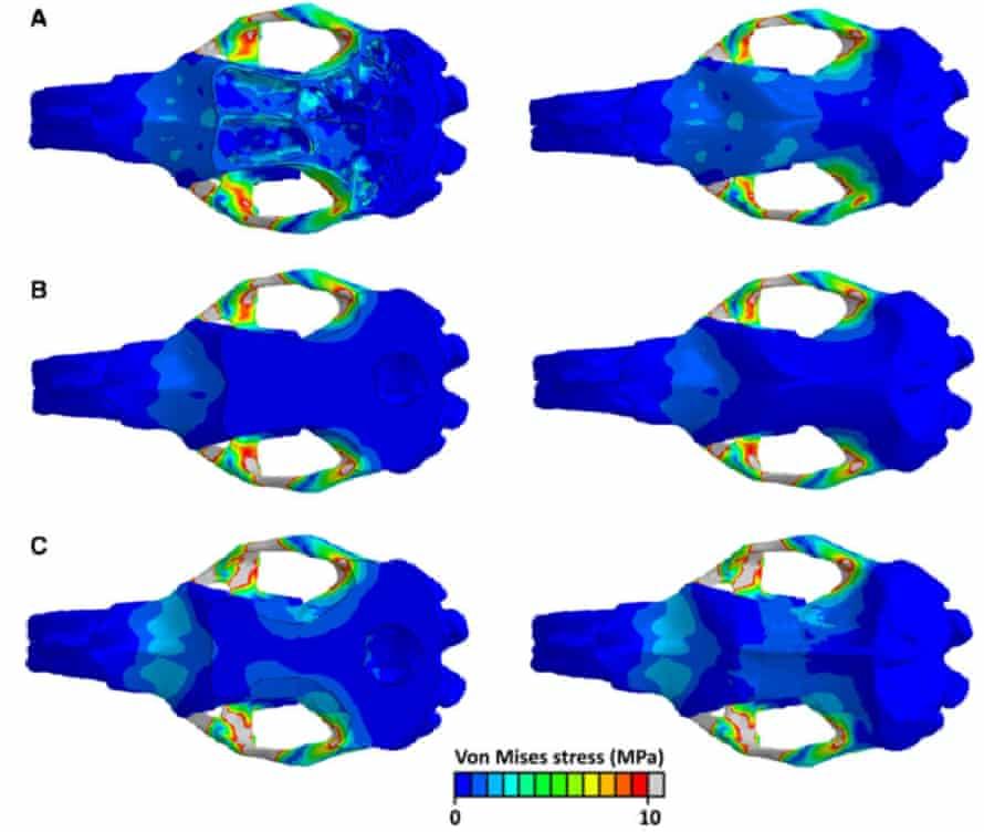 Finite Element Analysis of an extinct giant marsupial