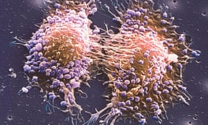 Two prostate cancer cells