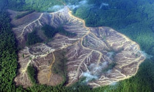 Jambi province, Sumatra. A logged-over area in the vast track of pulp wood concessions.