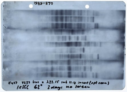 The first genetic fingerprint, prepared by Jeffreys at Leicester University in 1984. Photograph: SSPL/Getty Images