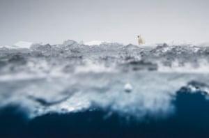 Runner up, mammals: Ole Jørgen Liodden (Norway) Polar bear world