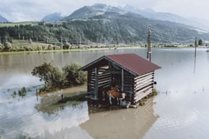 Kaprun, Austria Cows stand by a shed in a flooded meadow