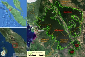Batang Toru ecosystem showing the eastern and western populations of the Tapanuli orangutans, which will be further severed by the dam and its infrastructure.