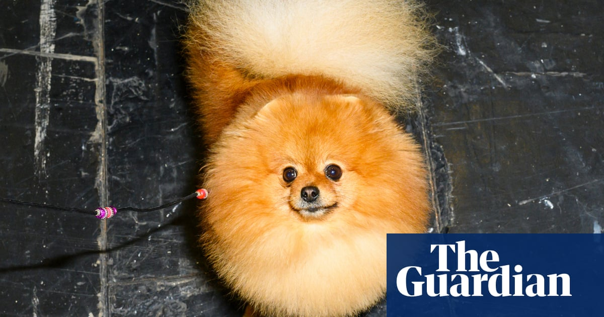 Crufts uncovered: 'Dog people look like hairdressers with very small clients'