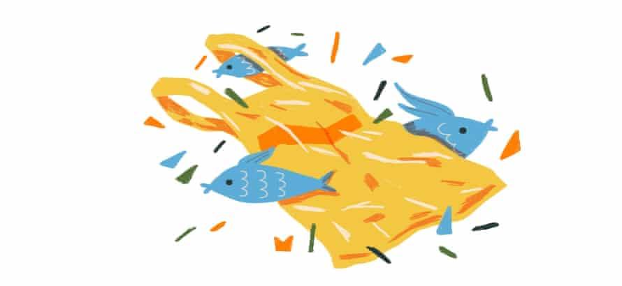 fish around a bag illustration