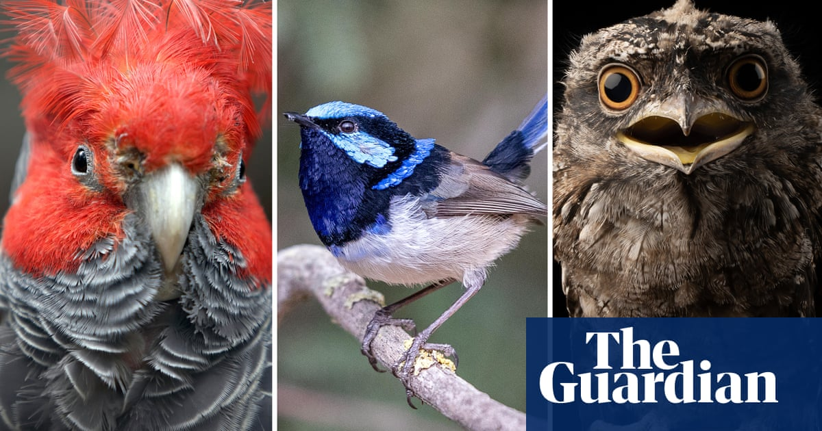And then there were 10: Australian bird of the year heads into final tense day of voting