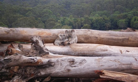 a bulldozed logpile