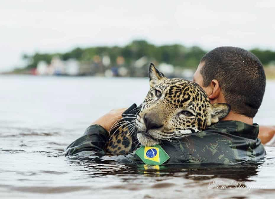 A Brazilian soldier swims in the Negro river holding Jiquitaia, a two-year-old jaguar that was adopted by the military command of the Amazon