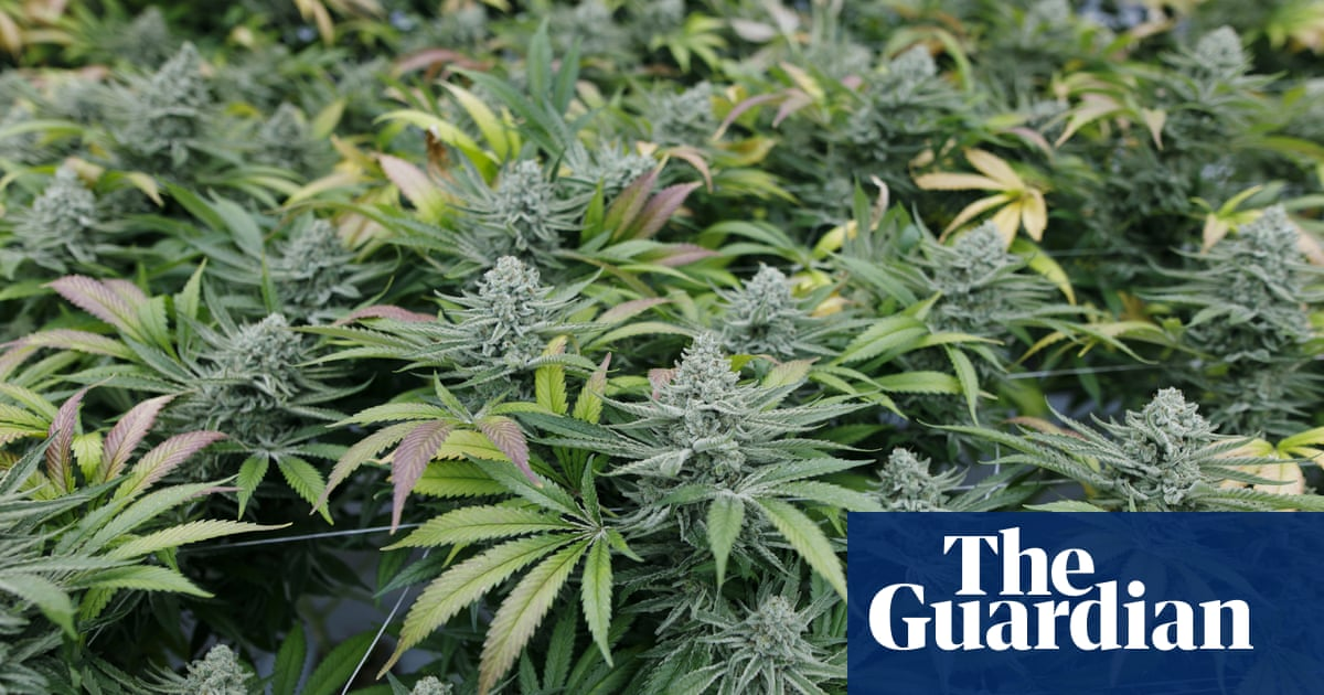 Study links cannabis use during pregnancy to autism risk