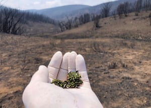 The Australian Defence Force flew a team of experts to Kosciuszko national park to rescue the endangered southern corroboree frog after protective enclosures were destroyed by bushfire