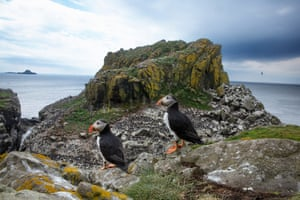 two standing puffins