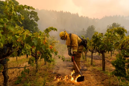 Firefighters work on a vineyard to contain the Glass fire, which tore through the Napa region this summer