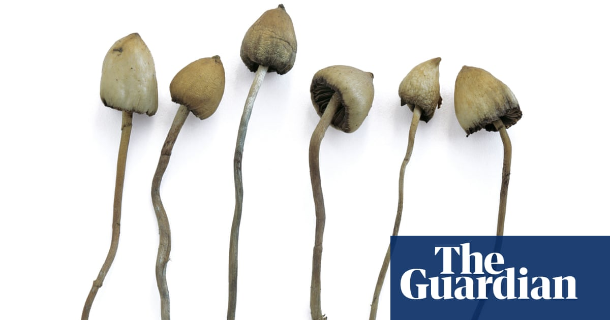 Is it safe to take magic mushrooms? | Life and style | The