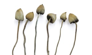 The 'magic' ingredient in these mushrooms mimics serotonin activity in the brain.