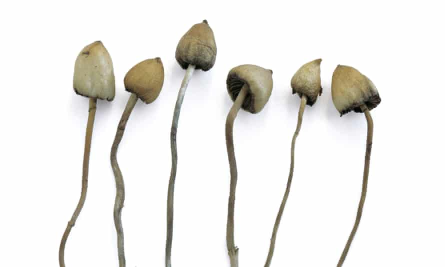 The 'magic' ingredient in these mushrooms mimics serotonin activity in the brain.