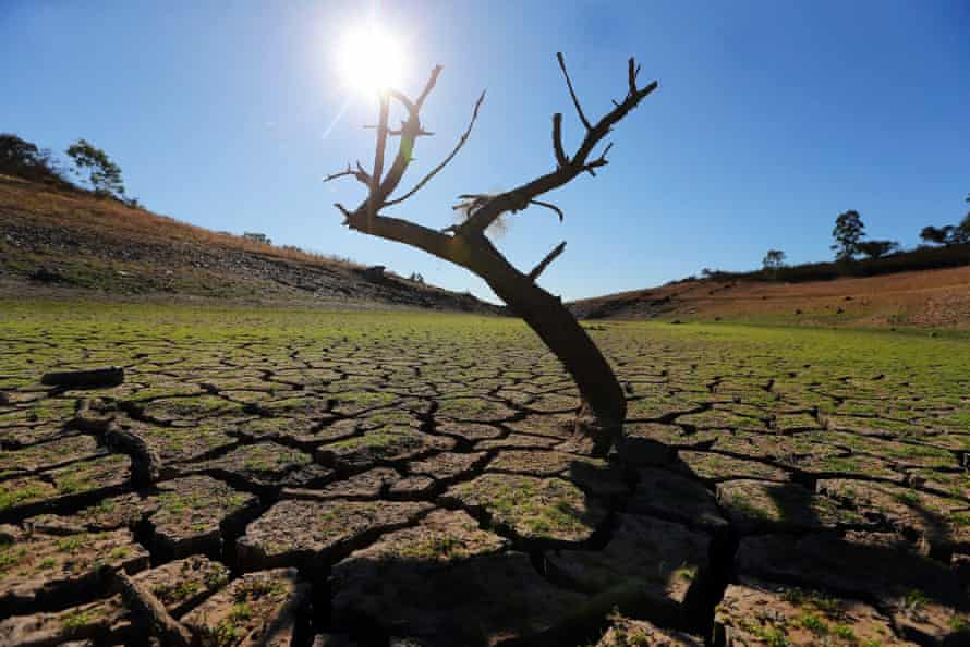 A dead tree is seen in the middle of Vigia Dam in Redondo, Southern Portugal