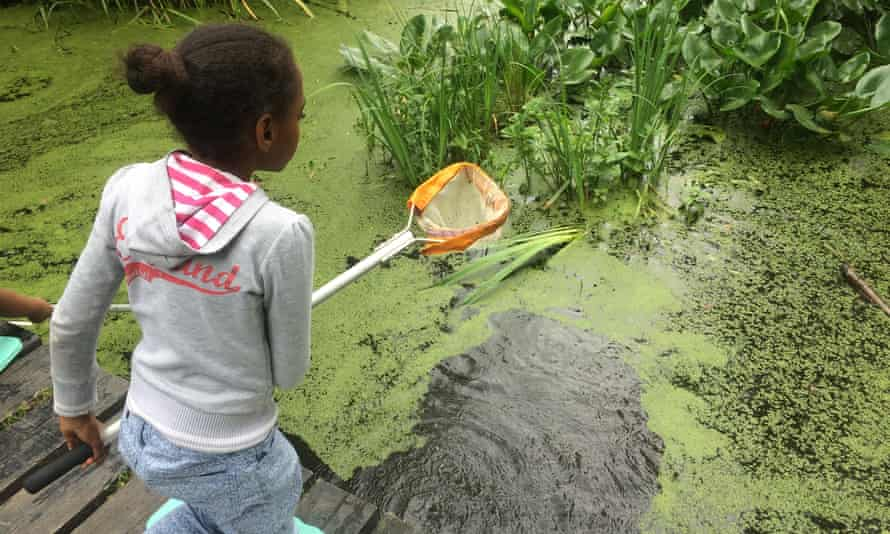 Pond dipping with the Wildlife Trust.