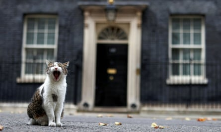 Larry the cat yawning in Downing Street