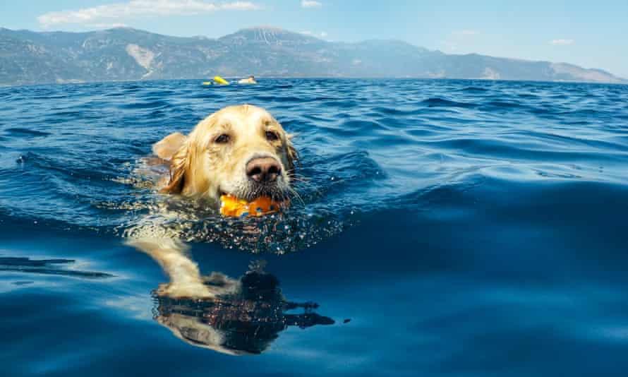 Dog Swimming In Sea