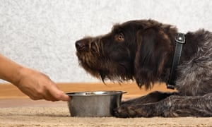Pet food is an environmental disaster – are vegan dogs the answer