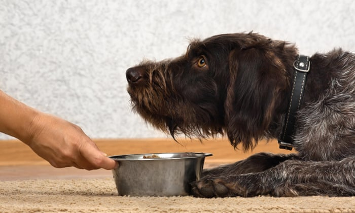 Pet food is an environmental disaster – are vegan dogs the