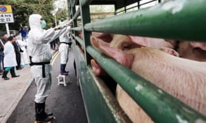 Pigs in a truck being checked at the entrance of a slaughterhouse in Sheung Shui, China.