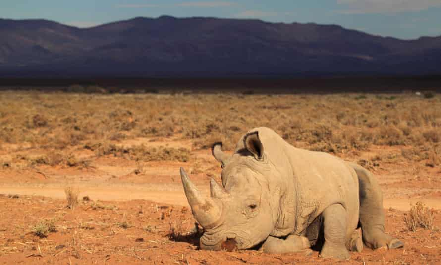 A rhino in a private game reserve