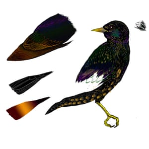 I think I enjoyed working on the goshawk most – it's such a majestic bird. When I was a small boy I used to draw soldiers and armies having battles and make sounds at the same time; with the goshawk I was nearly squawking the whole way!